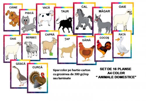 planse-animale-domestice