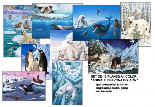 planse-animale-polare