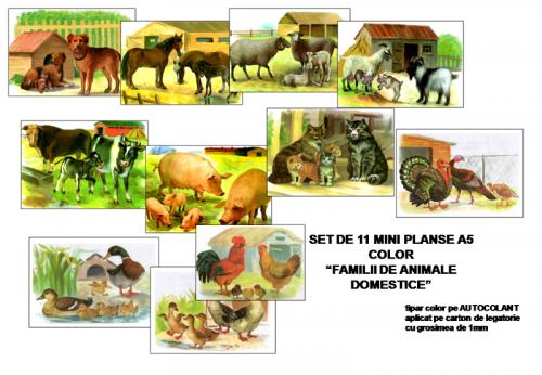 mini-planse-familii-de-animale-domestice