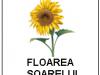 24-jetoane-cu-flori